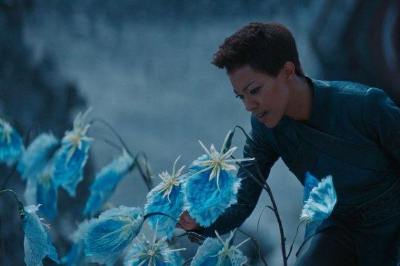 blue-plants